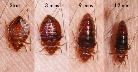 bed bug exterminator phoenix cost