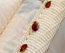 Phoenix Bed Bug Removal